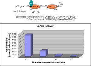 ChIP - Anti-HDAC1 antibody - ChIP Grade (ab7028)