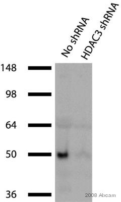 Western blot - HDAC3 antibody - ChIP Grade (ab7030)