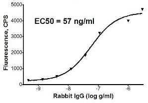 Sandwich ELISA - Rabbit IgG antibody (ab72465)
