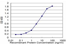 ELISA - HARS antibody [Not required] (ab77034)