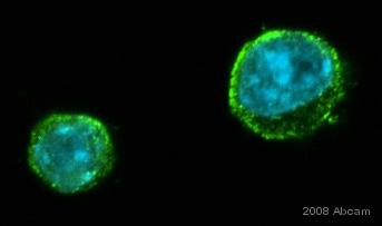 Immunocytochemistry/ Immunofluorescence - Anti-CX3CR1 antibody (ab8021)