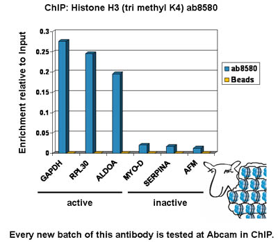 ChIP - Histone H3 (tri methyl K4) antibody - ChIP Grade (ab8580)
