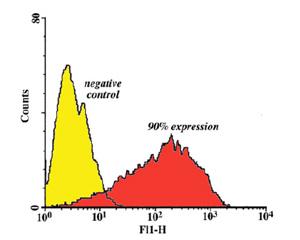 Flow Cytometry - CD90 / Thy1 antibody [OX7] (ab8872)