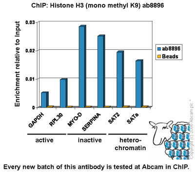ChIP - Histone H3 mono methyl K9 antibody (ab8896)