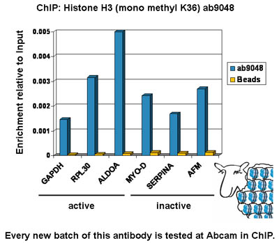 ChIP - Histone H3 (mono methyl K36) antibody - ChIP Grade (ab9048)