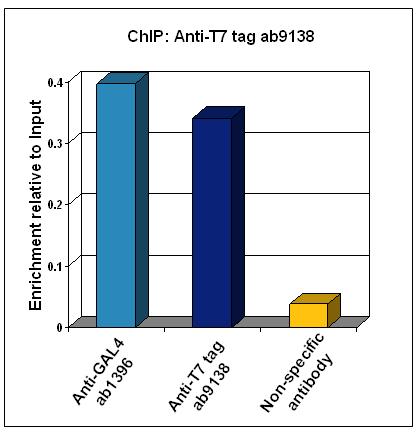 ChIP - T7 tag antibody - ChIP Grade (ab9138)