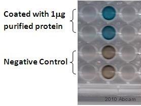 ELISA - Alkaline Phosphatase  antibody (ab354)