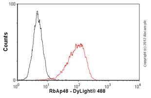 Flow Cytometry-Anti-RbAp48 antibody [11G10](ab488)