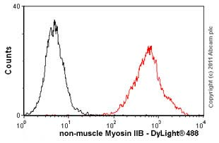 Flow Cytometry - Anti-non-muscle Myosin IIB antibody [3H2] (ab684)
