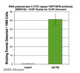 ChIP - RNA polymerase II CTD repeat YSPTSPS antibody [8WG16] - ChIP Grade (ab817)