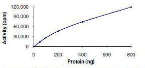 Functional Studies - PERK protein (ab101115)