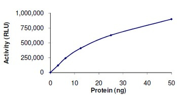 Functional Studies - SIRT1 protein (Active) (ab101130)