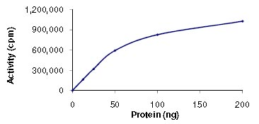 Functional Studies - CaMKI gamma protein (ab101503)