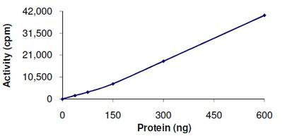 Functional Studies - DCAMKL1 protein (ab101777)
