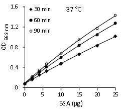 Functional Studies - BCA Protein Quantification Kit (ab102536)