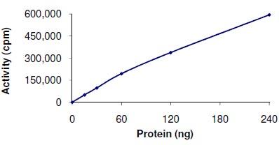 Functional Studies - MELK protein (ab102551)