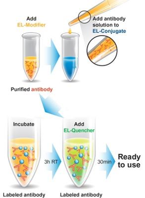 Conjugation - EasyLink Cy7® Conjugation Kit (1 x 1mg Cy7®)  (ab102880)