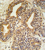 Immunohistochemistry (Formalin/PFA-fixed paraffin-embedded sections) - PTP4A2 antibody (ab103093)