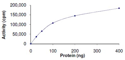 Functional Studies - Casein Kinase 1 delta protein (ab103955)