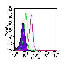 Flow Cytometry - ROR gamma antibody [4G419] (FITC) (ab104906)