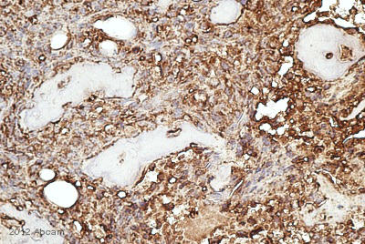 Immunohistochemistry (Formalin/PFA-fixed paraffin-embedded sections) - Anti-Src antibody (ab105215)