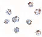 Immunocytochemistry - Matrilin 3 antibody (ab106388)