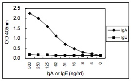 Sandwich ELISA - IgA antibody [KT41] (ab106731)