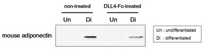 Functional Studies - DLL4 protein (ab108557)