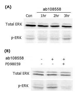 Functional Studies - ARP4 protein (ab108558)