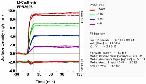 Other-Anti-LI Cadherin antibody [EPR3996](ab109190)