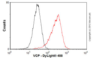 Flow Cytometry-Anti-VCP antibody [EPR3307(2)](ab109240)