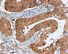 Immunohistochemistry (Formalin/PFA-fixed paraffin-embedded sections) - Anti-ERK1 antibody [EP4967] (ab109282)