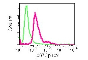 Flow Cytometry - Anti-NOXA2/p67phox antibody [EPR5065] (ab109523)