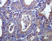 Immunohistochemistry (Formalin/PFA-fixed paraffin-embedded sections) - Hsp105 antibody [EPR4576] (ab109624)