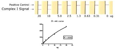 ELISA - Complex I Human Protein Quantity Dipstick Assay Kit (ab109722)