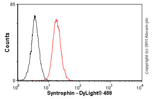 Flow Cytometry - Syntrophin antibody [1351] (ab11425)