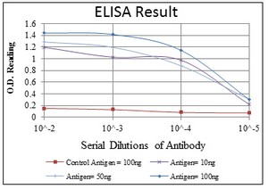 ELISA - AMPK alpha 1 antibody [2B7] (ab110036)