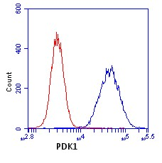 Flow Cytometry - Mitochondrial Pyruvate dehydrogenase kinase 1 antibody [2H3AA11] (ab110335)