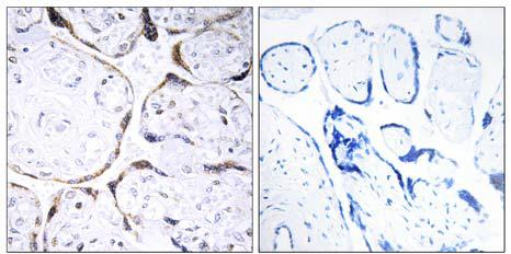 Immunohistochemistry (Formalin/PFA-fixed paraffin-embedded sections) - POFUT2 antibody (ab110922)