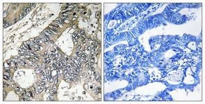 Immunohistochemistry (Formalin/PFA-fixed paraffin-embedded sections) - Translation factor GUF1, mitochondrial antibody (ab110951)