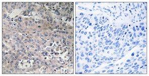 Immunohistochemistry (Formalin/PFA-fixed paraffin-embedded sections) - TUFM antibody (ab111262)