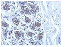 Immunohistochemistry (Formalin/PFA-fixed paraffin-embedded sections) - E2 230K antibody (ab111707)