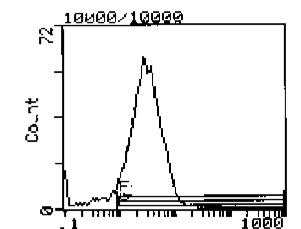 Western blot - CD44 antibody [KM81] (Biotin) (ab112169)