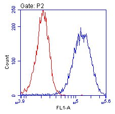 Flow Cytometry - ENO1 antibody [2G2AG11BF8] (ab112994)