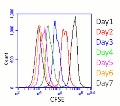 Flow Cytometry - CFSE - Cell Labeling Kit (ab113853)
