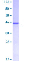 SDS-PAGE - CD48 protein (ab114535)