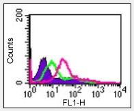 Flow Cytometry - Anti-IL24 antibody (ab115207)