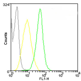 Flow Cytometry - Anti-Hsp70 antibody [C92F3A-5] (DyLight® 488) (ab115635)