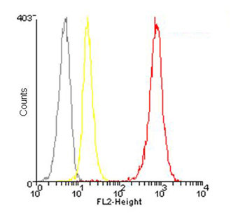 Flow Cytometry - Anti-Hsp90 beta antibody (Phycoerythrin) (ab115641)