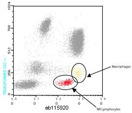 Flow Cytometry - Anti-CD16 antibody [GRM1] (FITC) (ab115920)
